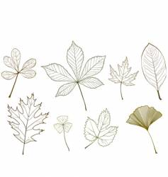 Leaf design elements vector