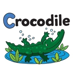 Little crocodile or alligator for abc alphabet c vector