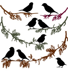 Birds on branch tree vector