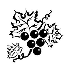 grape branch in black vector image