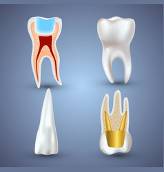 Set of 3d realistic clean and dirty tooth vector
