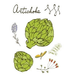 Colorful set of fresh hand drawn artichokes vector