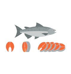 salmon fish and sliced of salmon vector image