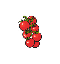 Bunch of ripe vine tomatoes vector