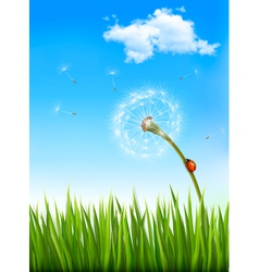 Nature background with a dandelion and a ladybug vector image