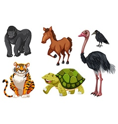 Set of different wild animals vector