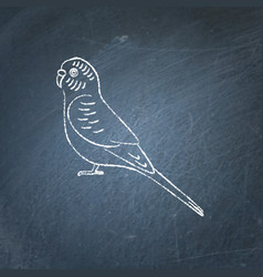 budgerigar parrot icon sketch on chalkboard vector image