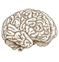 Engraving brain vector