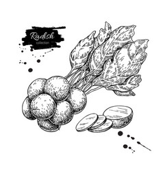 Radish bunch hand drawn vector