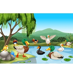 Park scene with lots of ducks and birds vector