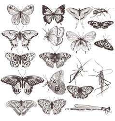 collection of hand drawn butterflies vector image vector image