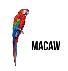 Hand drawn red green-winged macaw parrot vector