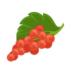 healthy sour red currant with green leaf isolated vector image