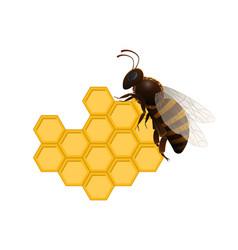 Honeybee on fresh honeycomb symbol vector