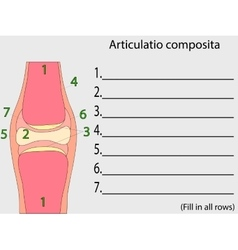 Complex joint education anatomical atlas vector