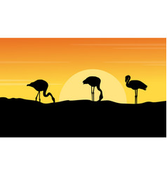 At sunset flamingo landscape silhouettes vector