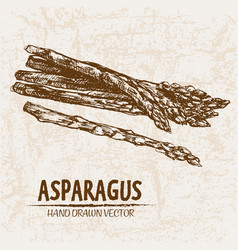 digital detailed line art asparagus vector image vector image