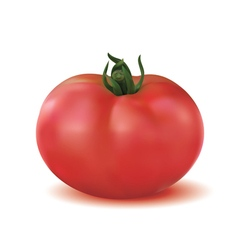 Big ripe red fresh tomato vector