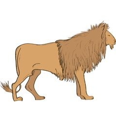 Lion- vector image vector image
