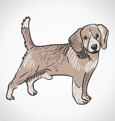 Beagle Dog vector image