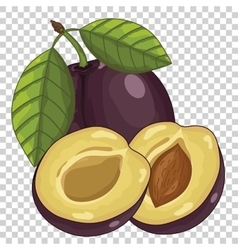 Plum Isolated vector image
