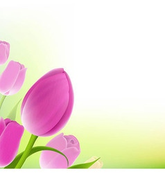 Card Of Pastel Tulips vector image