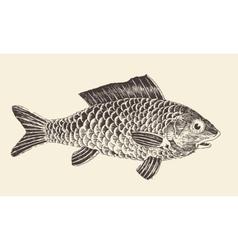 Fish Bream vintage engraved vector image