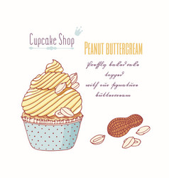 Hand drawn cupcake peanut flavor vector