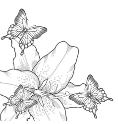 background with lilies and butterflies vector image