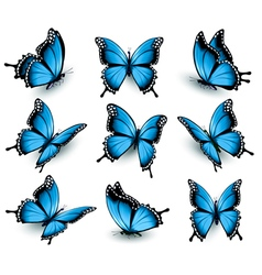 Set of beautiful blue butterflies vector