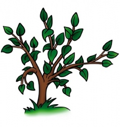 small deciduous tree vector image