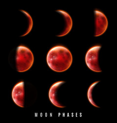 the phases of moon vector image
