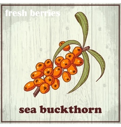 Hand drawing of sea buckthorn fresh vector