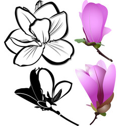 Flowers magnolia vector