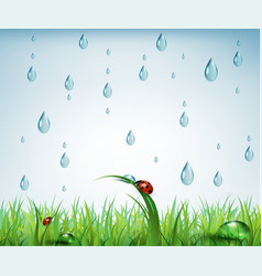 Warm rain with drops of water and grass vector