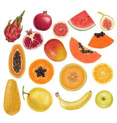 colorful rainbow exotic juicy delicious fruits vector image vector image