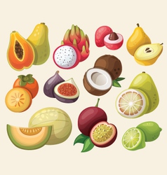set of exotic fruit vector image vector image