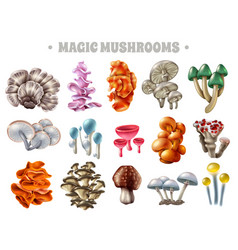 magic mushrooms set vector image vector image
