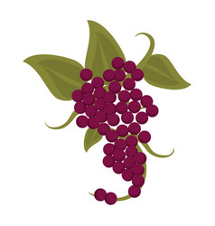 Bunch grape wine icon vector