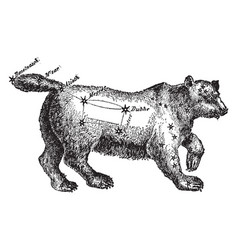 Ursa major vintage vector