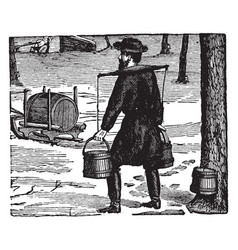 gathering sap to make maple sugar vintage vector image vector image