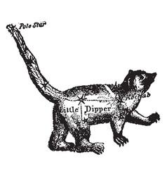 Ursa minor vintage vector