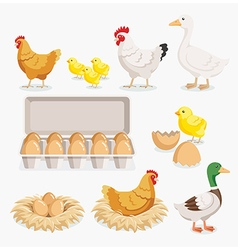Chicken duck chick egg packaging and the nests vector