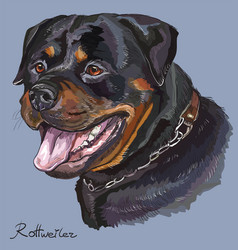 rottweiler colorful hand drawing portrait vector image vector image