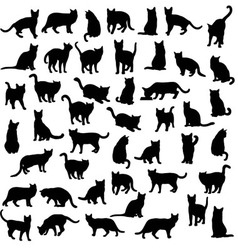 Cat and activity pet animal silhouettes vector