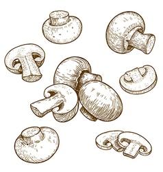 Engraving champignons set vector