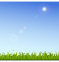 Green grass on a clear blue sky background vector image