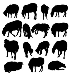 Sheep Lamb Set - vector image