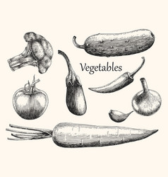 vegetables hand drawing engraving style vector image vector image