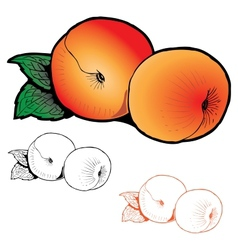 Two peaches with leaves of different styles vector
